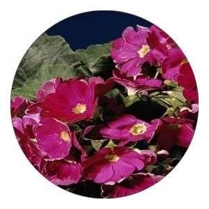 ROUND   Designer Coasters Flower/Flowers/Floral   (CRFL 243) Home
