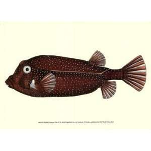 Nodder Antique Fish IV   Poster by Frederick P. Nodder (9