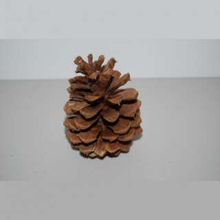 This is our Large Pine Cone with Bison Tube Geocache Containers.