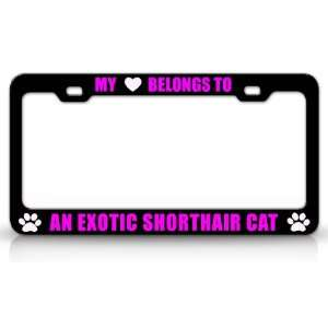 MY HEART BELONGS TO AN EXOTIC SHORTHAIR Cat Pet Auto License Plate