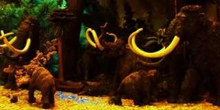 WOOLLY MAMMOTH~Prehistoric Life ~ FREE SHIP $25 SAFARI 095866279929